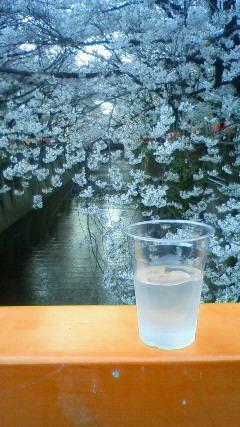 20110410-sakura.jpg